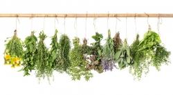 بهترین داروی گیاهی برای کاهش وزن چیست؟ 5 گیاه دارویی چربی سوز | طب سنتی
